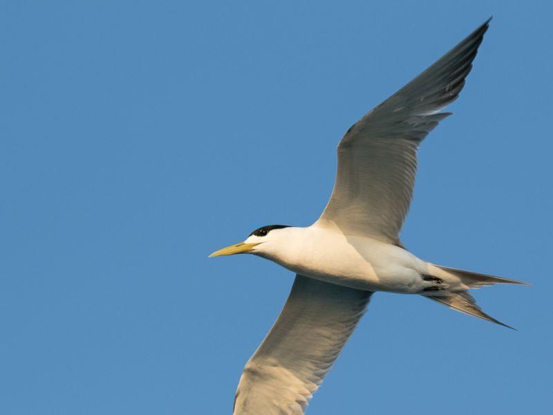 20170527_bird_3523.jpg