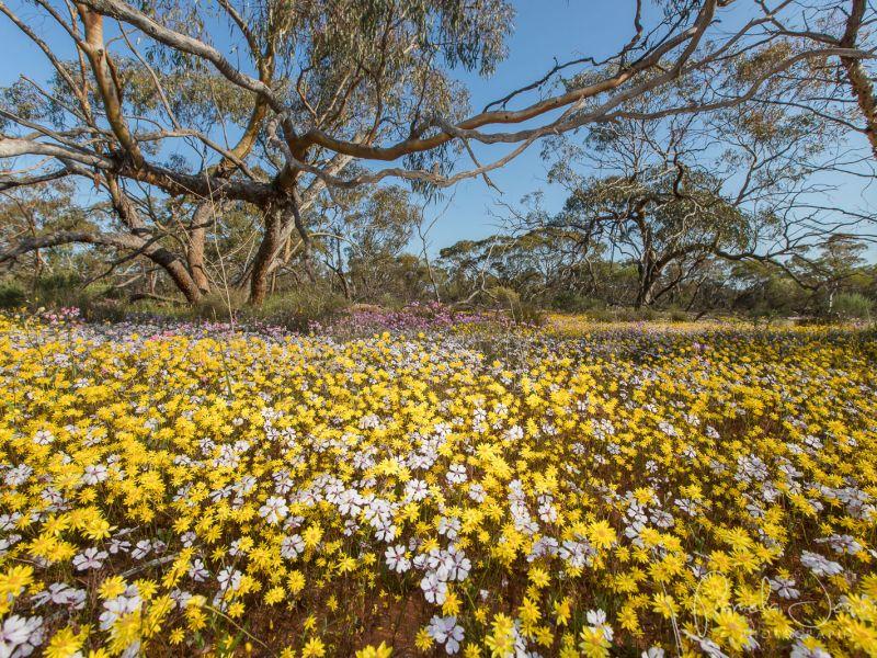 20180908_wildflower_116.jpg