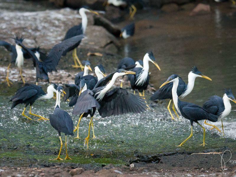 birds fishing at end of wet season