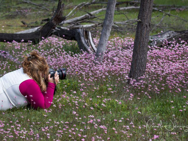 Wildflowers_WA