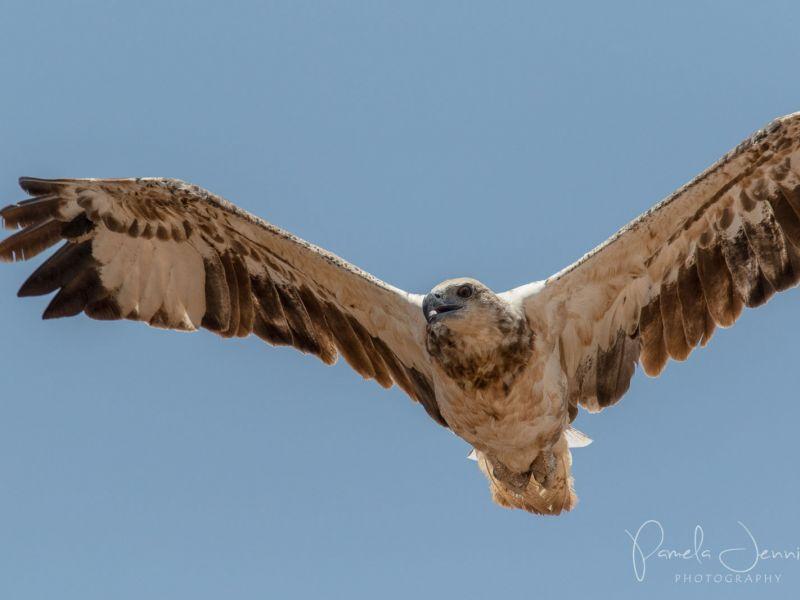 osprey 01